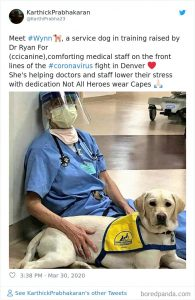 canine companions with Dr